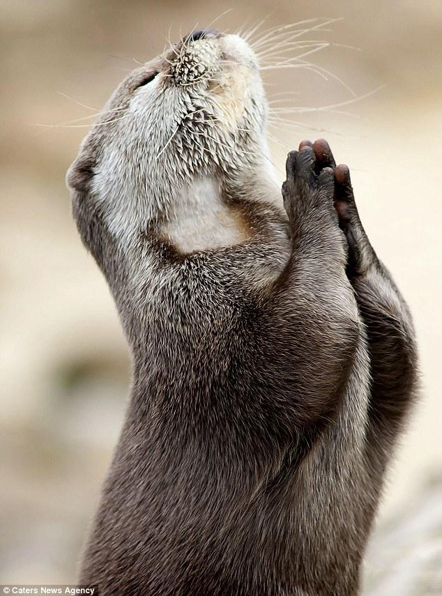 praying-2Botter.jpg