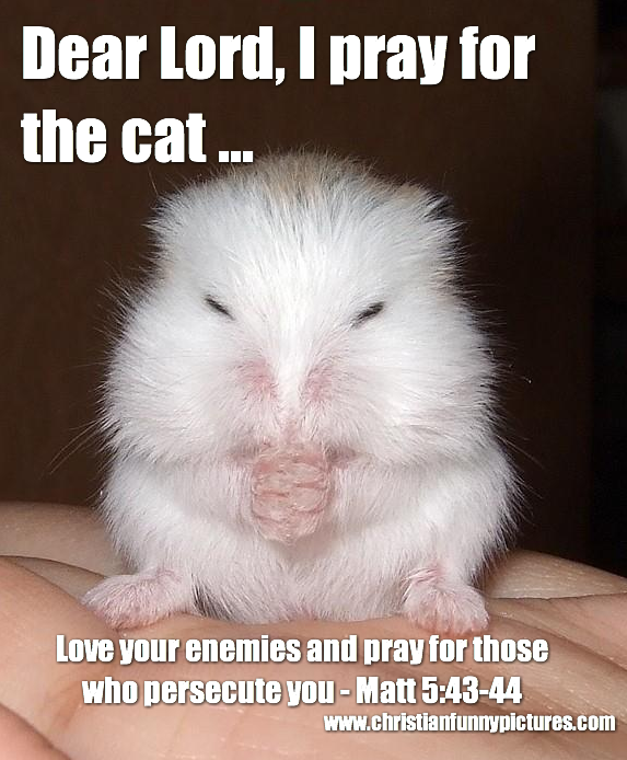 Funny Christian Quotes Dear Lord I Pray For The Cat .christian Funny Pictures  A .