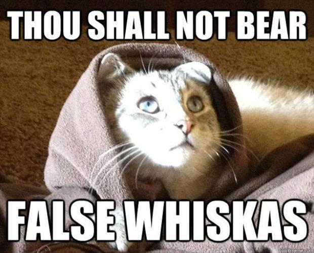 Not Funny Cat Meme : Thou shall not bear false whiskas jesus cat christian funny