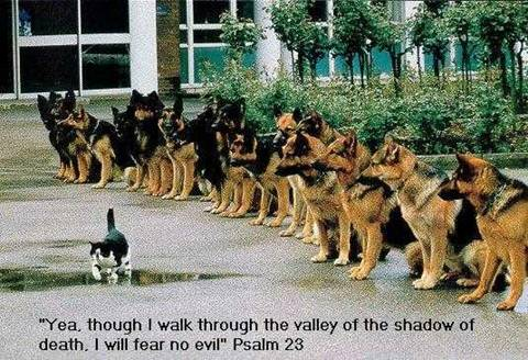 Psalm 23 funny 2