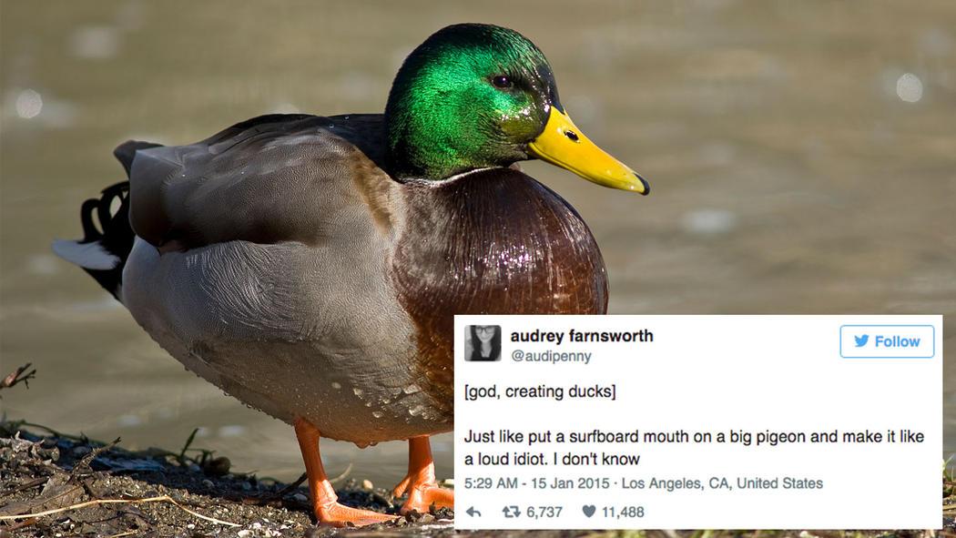 god-created-animals-ducks