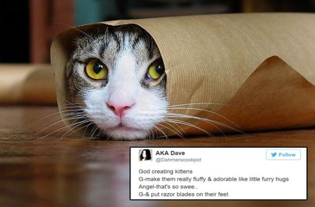 god-created-animals-kittens